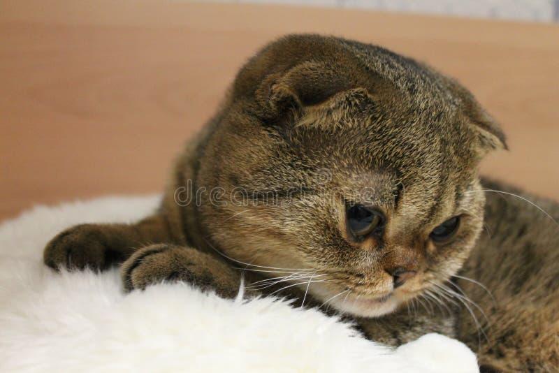 Котенок лежа на белой кровати стоковые фото