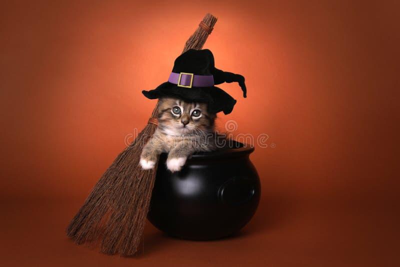 Котенок милой ведьмы хеллоуина тематический стоковое фото