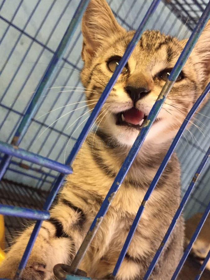 Котенок мяукая в клетке стоковая фотография