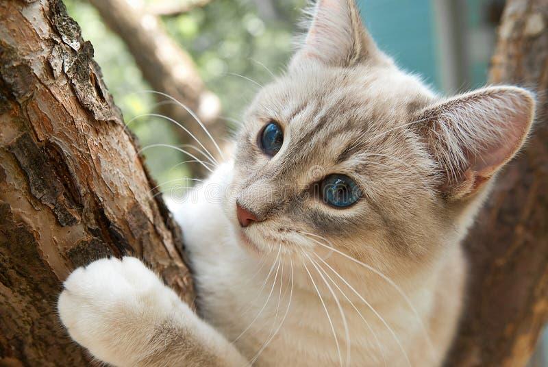 Котенок на дереве стоковое изображение