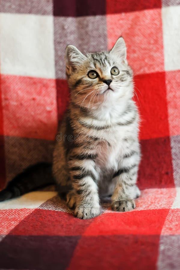 Котенок на кресле стоковая фотография