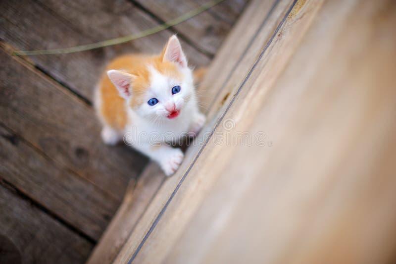 Котенок на улице стоковая фотография rf