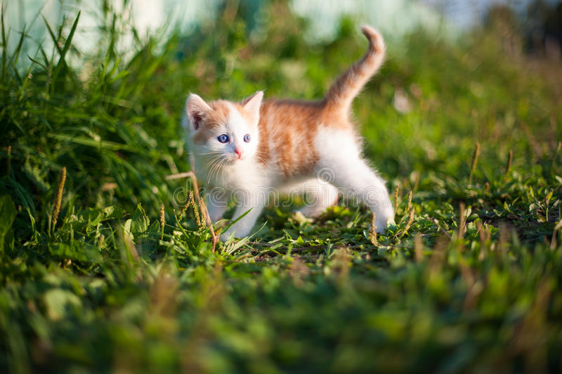 Котенок на улице стоковое фото rf