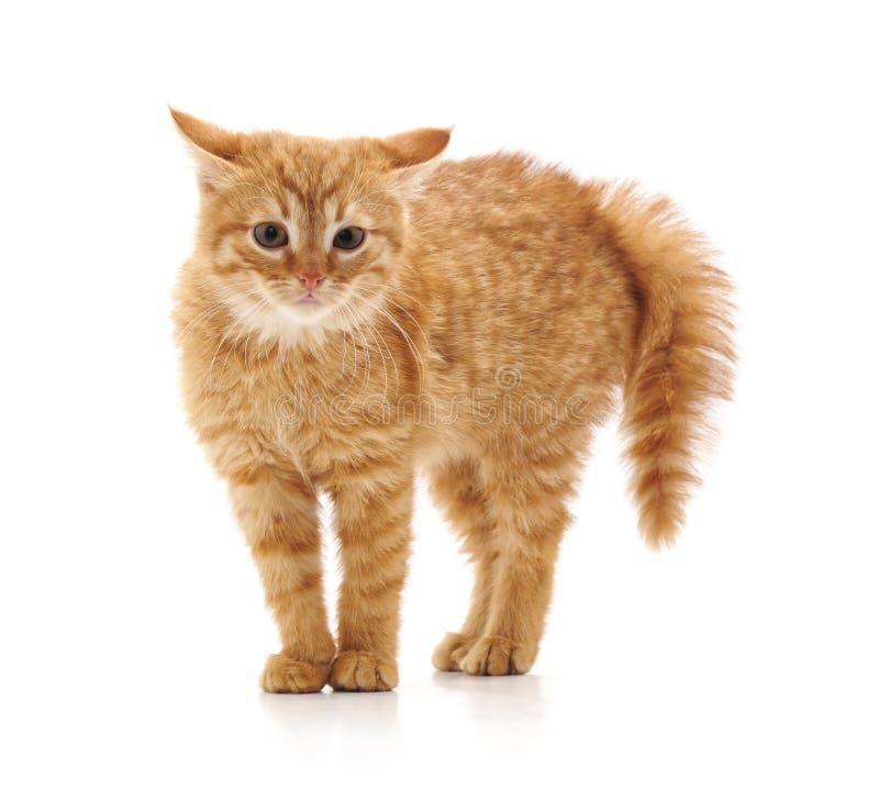 котенок немногая вспугнул стоковое изображение rf