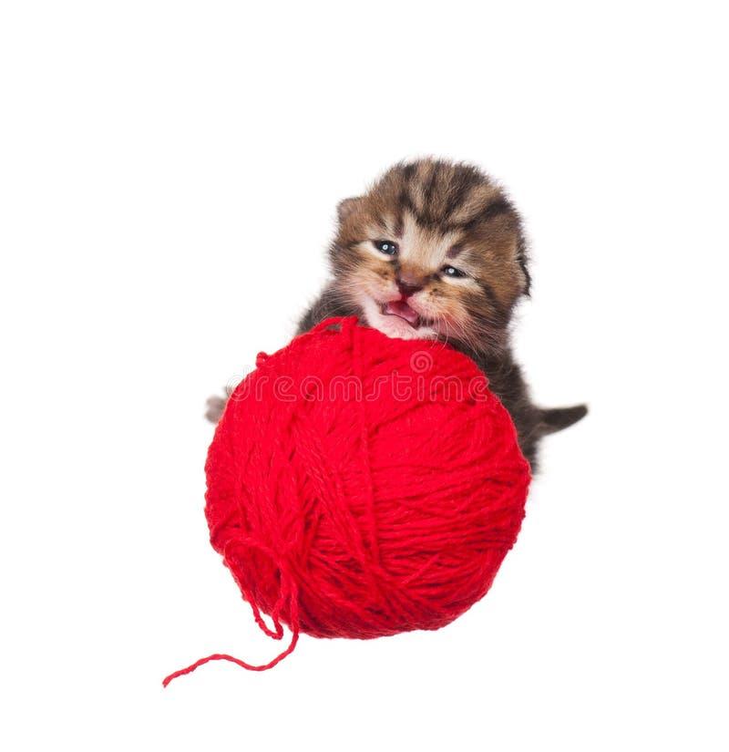 Download котенок немногая стоковое изображение. изображение насчитывающей малыш - 41657425