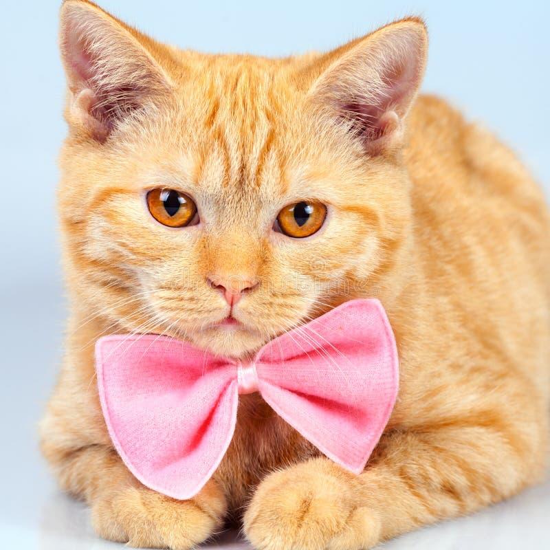 Котенок нося розовую бабочку стоковая фотография rf