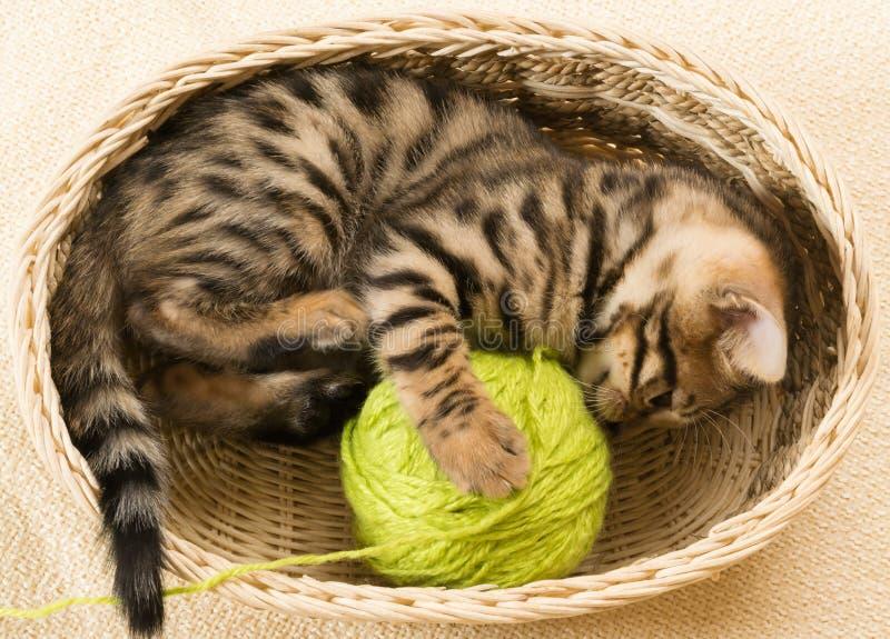 Котенок обматывает шарик потоков лежа в козе стоковая фотография rf