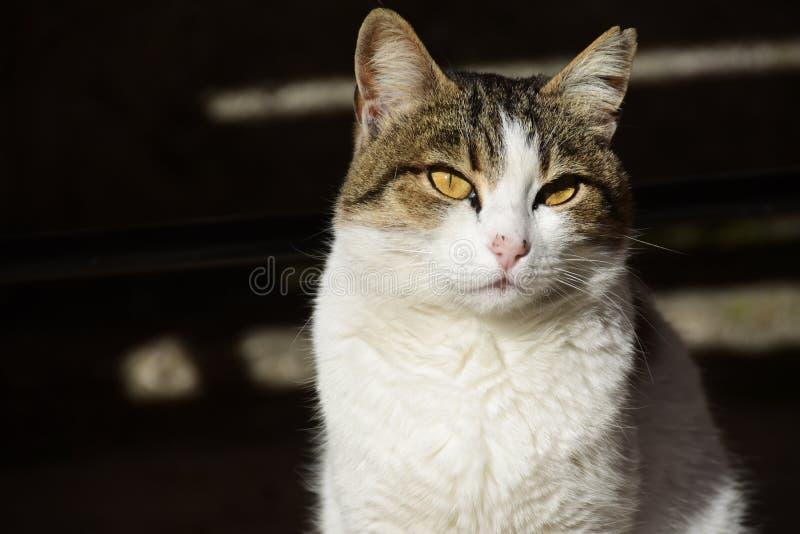Котенок ослабляет под Солнцем стоковое фото
