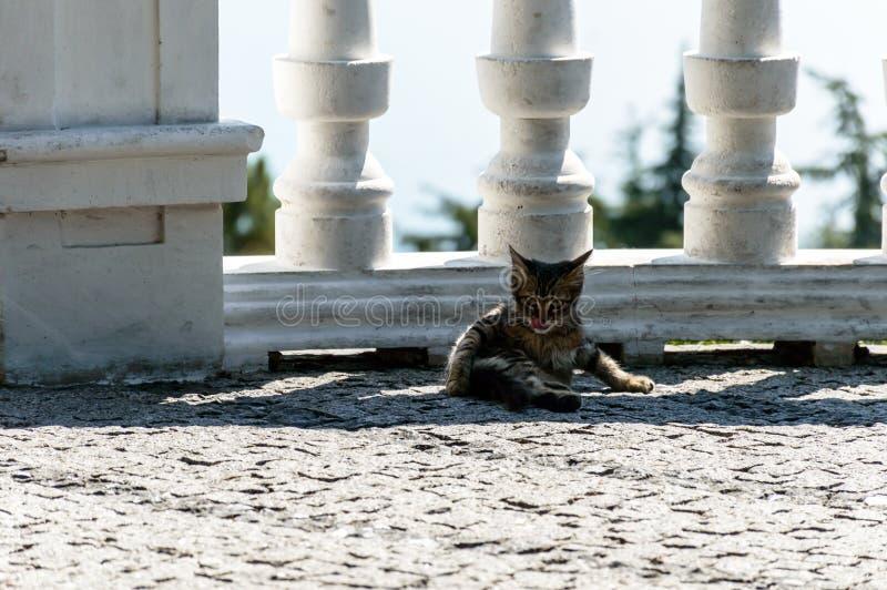 Котенок отдыхая в тени загородки стоковое фото