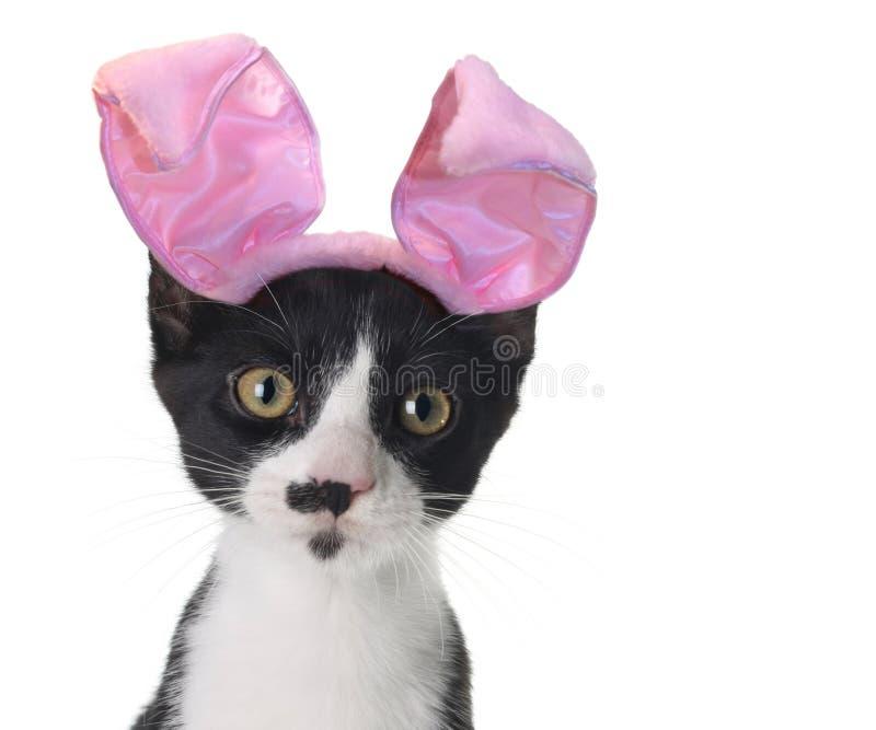 котенок пасхи зайчика стоковое фото rf