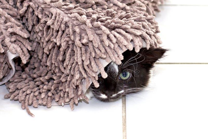 Котенок пряча под ковром