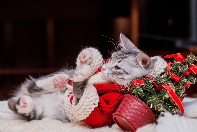 Download Котенок Санта Клаус стоковое изображение. изображение насчитывающей связано - 64884681