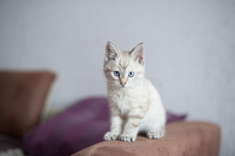 Котенок светлого цвета стоковое изображение rf