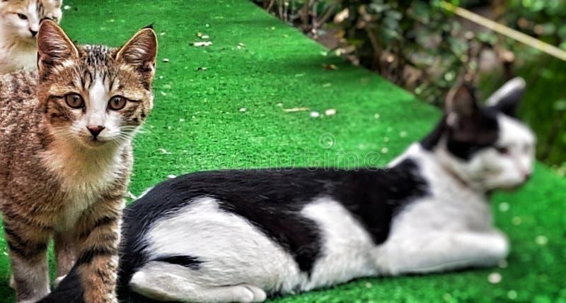 котенок семьи большого кота малый стоковые фото