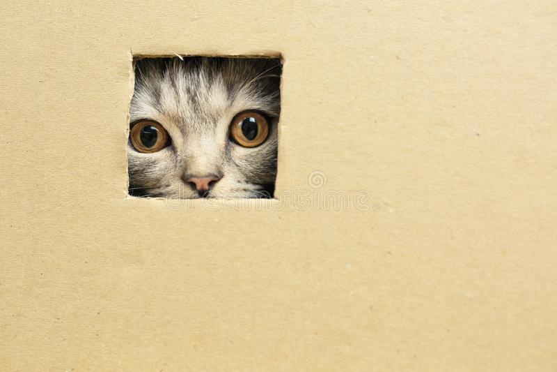 Download котенок сидя в картонной коробке, взгляды через отверстие Стоковое Изображение - изображение: 104345121