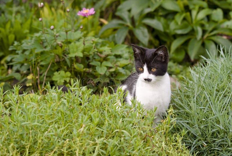 Котенок сидя в rockery стоковое фото rf