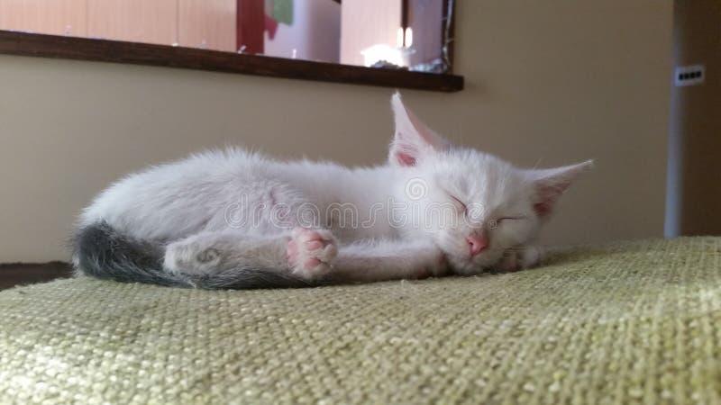 Котенок спать стоковое фото rf