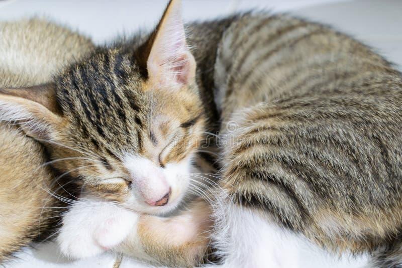 Котенок спать Striped чернотой стоковое фото rf
