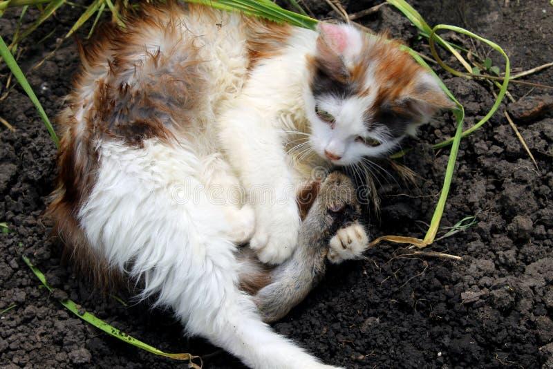 Download Котенок с мышью стоковое изображение. изображение насчитывающей кошачий - 41661149