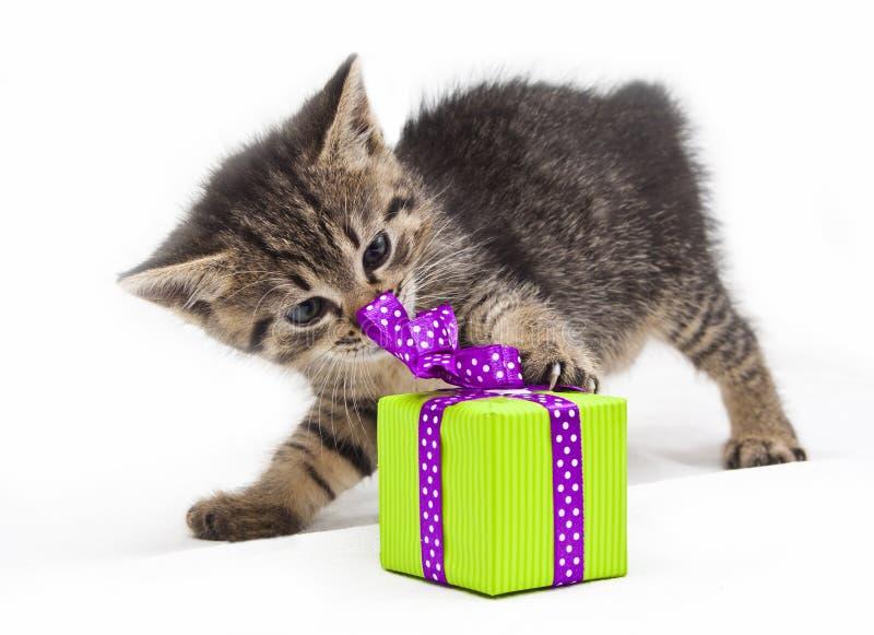 Котенок с настоящим моментом зеленого цвета стоковое изображение