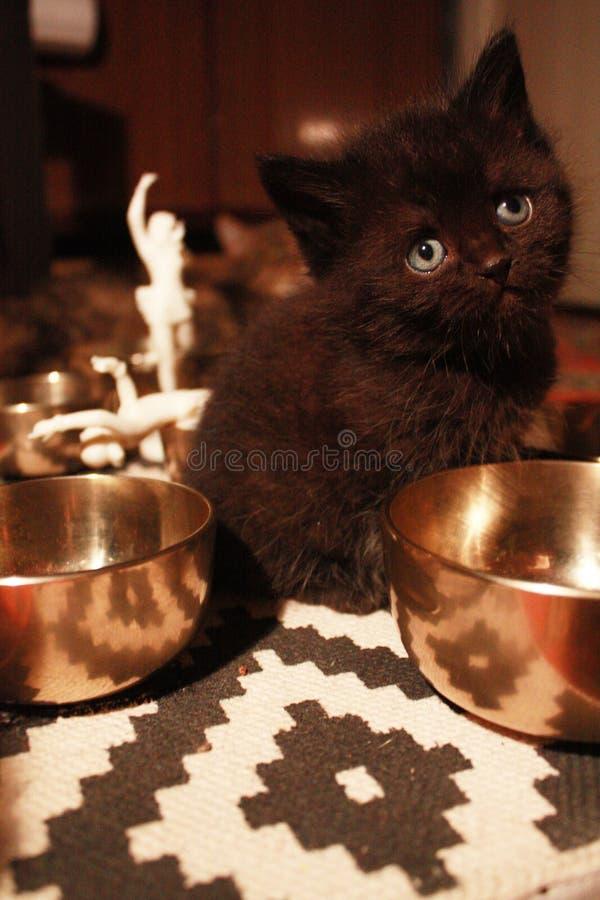 Котенок фантазера стоковые изображения rf