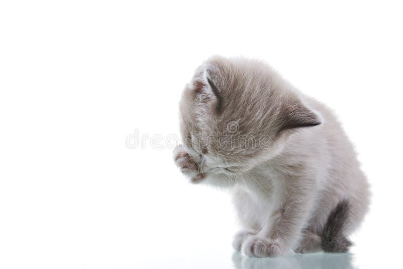 котенок холить младенца стоковая фотография rf