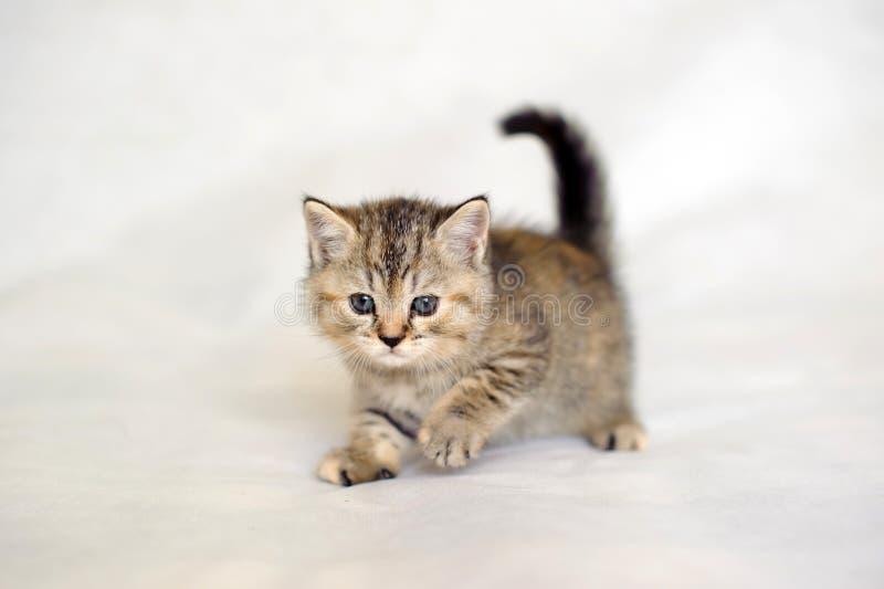 Котенок любимчика милый стоковое изображение rf