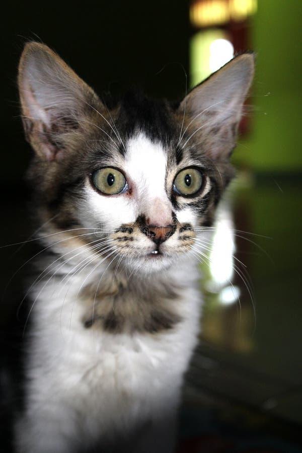 Котенок любознательный увидеть светлые камеры стоковое фото