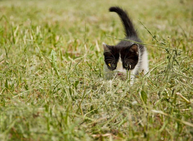 Download Котенок стоковое фото. изображение насчитывающей кот - 41663126