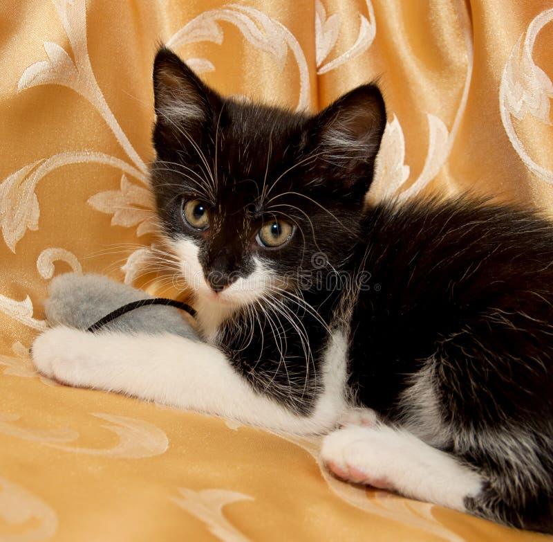 Download Котенок стоковое изображение. изображение насчитывающей кошачий - 41663215