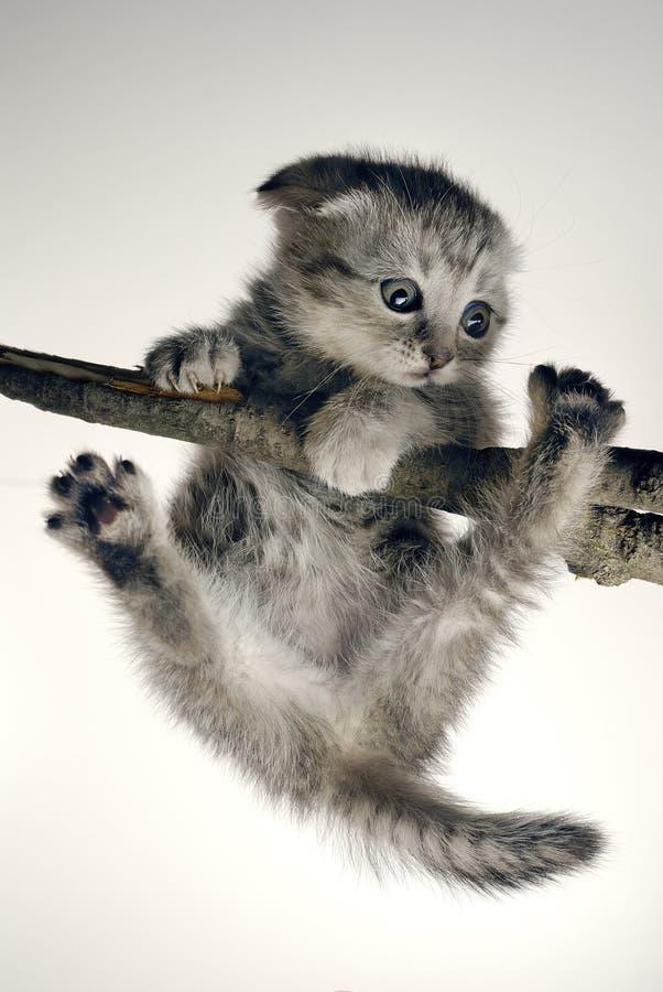военная котенок висит картинки быстро разнеслась вызвала