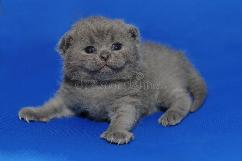 Котенок newborn, милое прелестное стоковое изображение rf