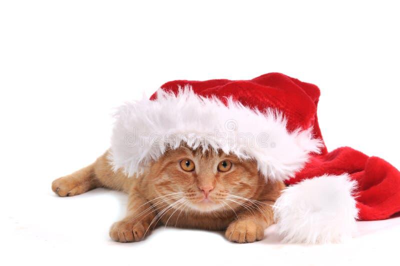 котенок santa стоковые изображения rf
