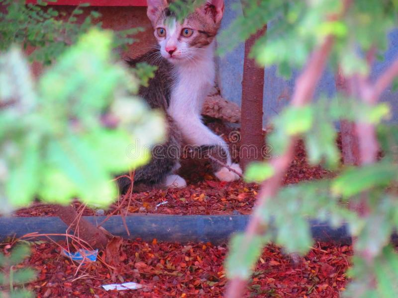 Котенок Starey стоковая фотография rf