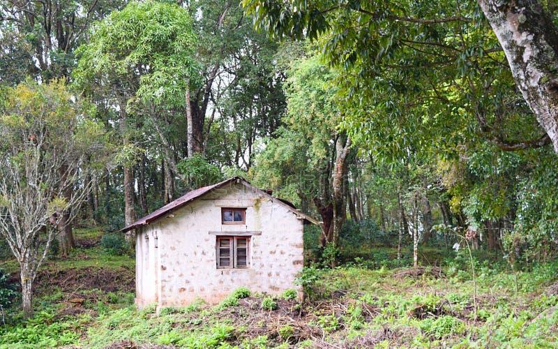 Коттедж хаты - в лесе с окружающей растительностью в индийской деревне стоковое фото rf