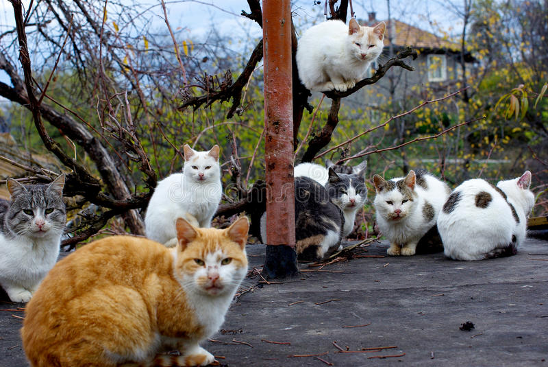 коты агрегата стоковое изображение rf