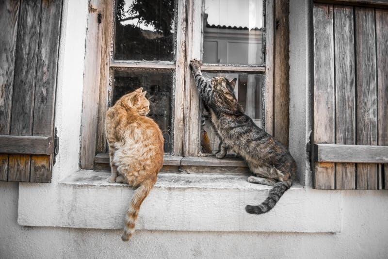 Коты в окне стоковая фотография rf