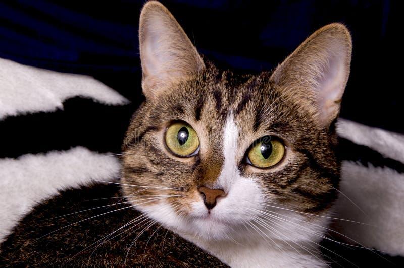коты закрывают лицевая сторона стоковая фотография rf