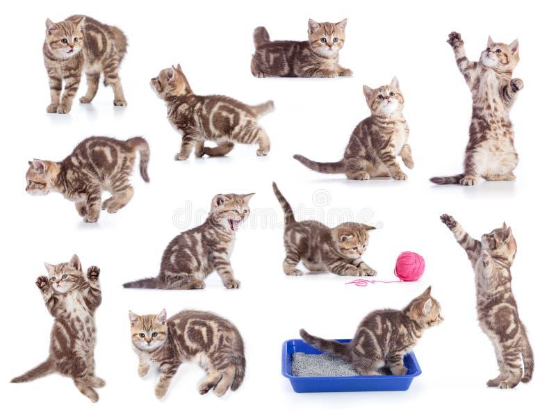 Коты изолировали комплект стоковое фото rf