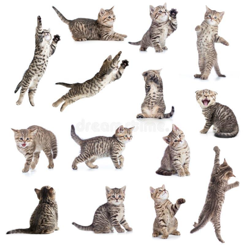 Коты или изолированное котятами собрание стоковая фотография rf