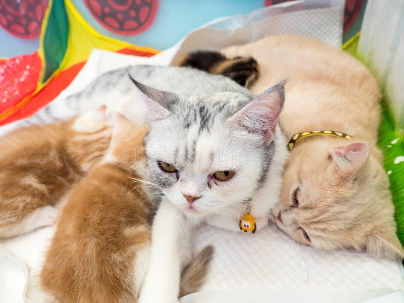 Коты кормя котят грудью, отборного фокуса стоковые фото