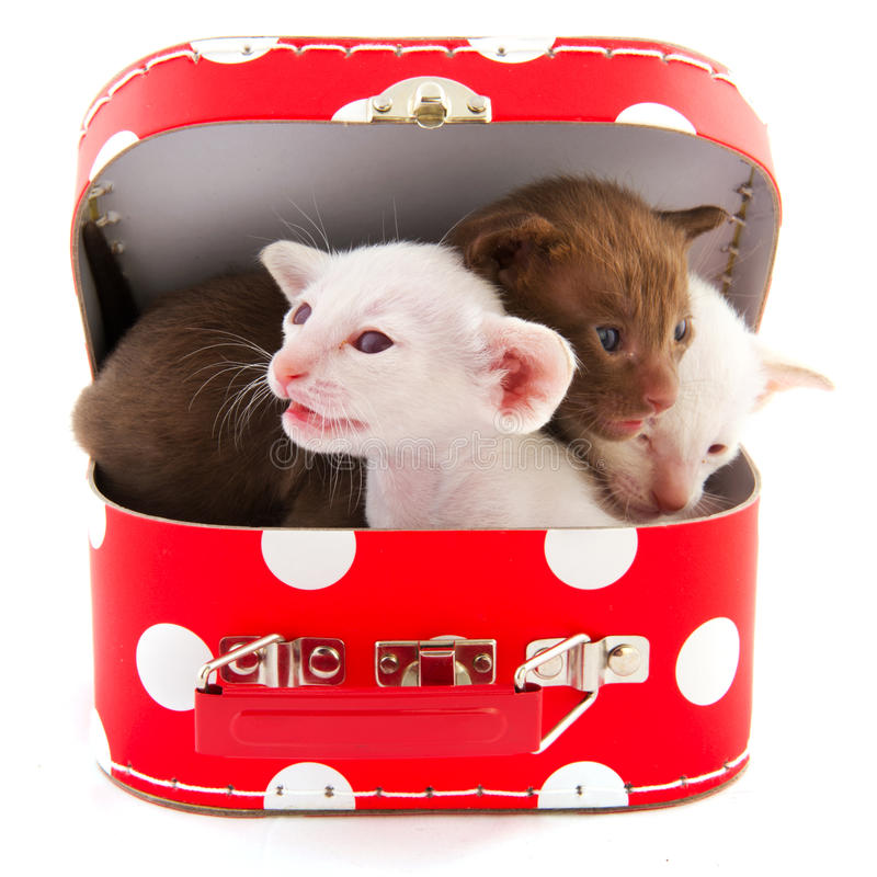 коты меньший красный чемодан стоковые фото
