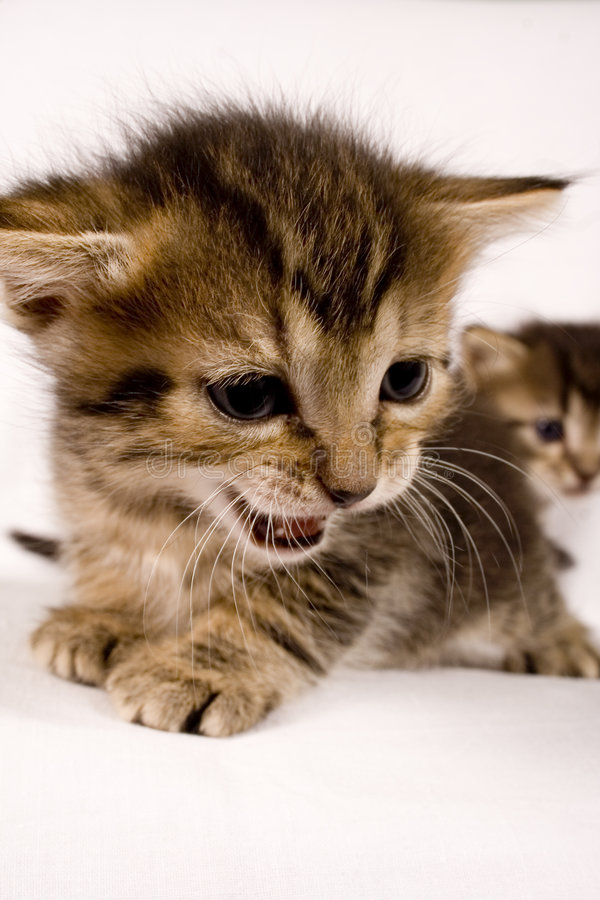 коты милые стоковое изображение