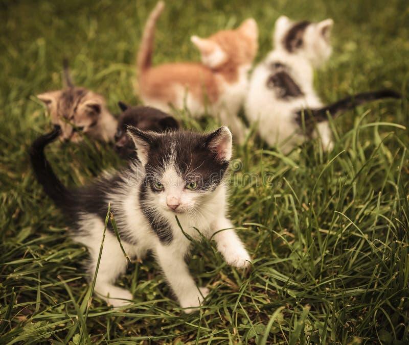Коты младенца играя в траве стоковые изображения