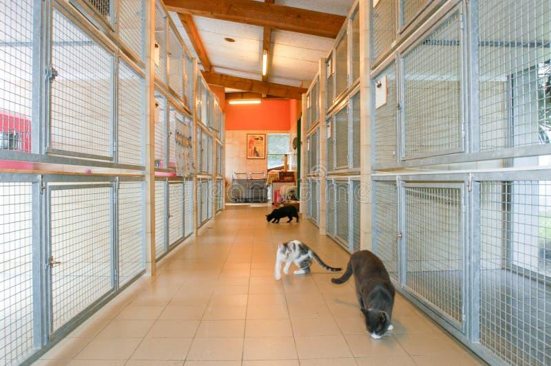 Коты на приюте для животных Лугано на Швейцарии стоковые фото
