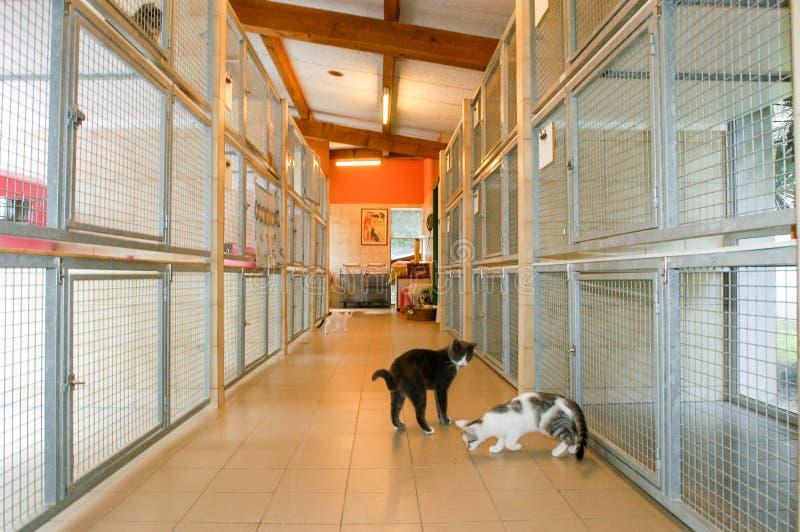 Коты на приюте для животных Лугано на Швейцарии стоковые изображения rf
