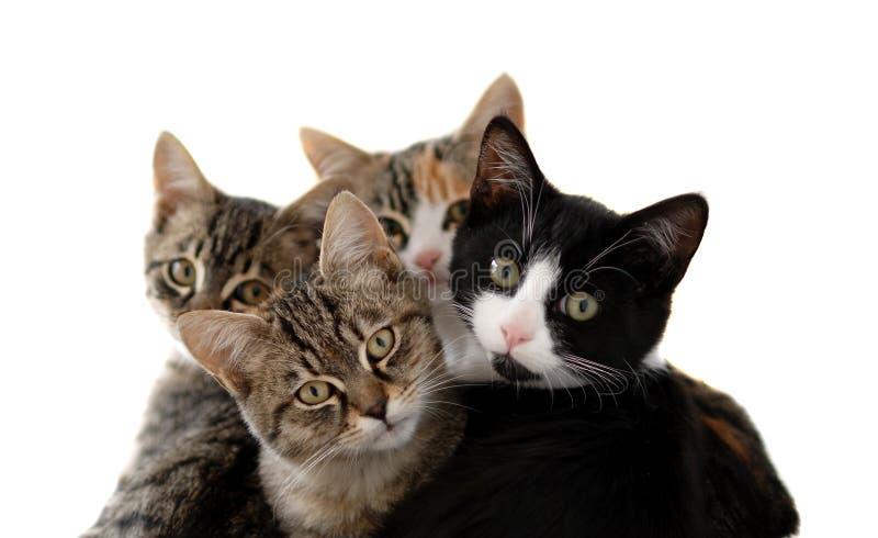 коты немногая стоковые изображения