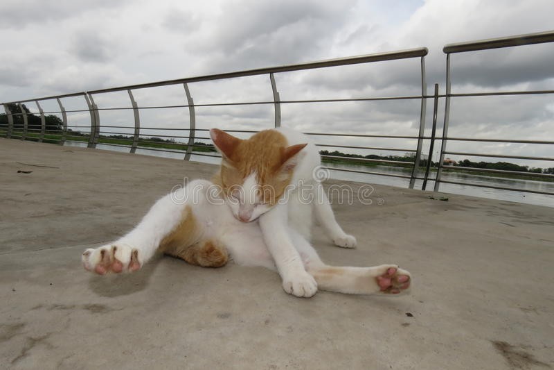 Коты очищают их тела - В саде около болота стоковая фотография rf