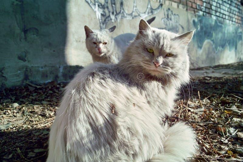 коты одичалые стоковое изображение