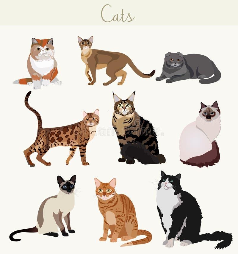 Коты породы вектора в различных представлениях Любимчики шаржа сильно детальные иллюстрация штока